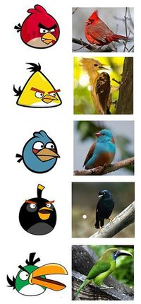 Funny Pictures About Real Angry Birds Oh And Cool Pics Also Photos