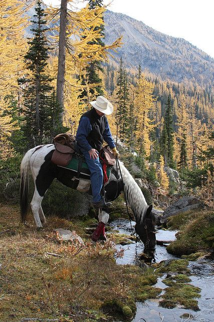 I try to keep my horse board, horses only, but this just holds too many memories of us riding our horses in the backwoods of Ocala National Forest.Sometimes a photo is just too sweet. Western Riding, Trail Riding, Western Art, O Cowboy, Cowboy Horse, Cowboy Ranch, Cowboy Baby, Cheval Pie, Westerns