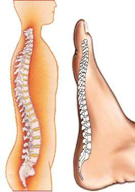 picioarele dureroase sub genunchi în spatele varicoselor cumpărați dar varicoseza
