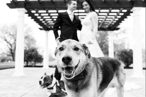 #RamblewoodCountryClub #RonJaworskiWedding #RonJaworskiGolf #GolfCourseWedding #OutdoorWedding #WeddingVenue #SouthJerseyWedding #RusticVenue #PetFriendly #WeddingCeremony