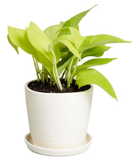 office plants no light. the 25 best office plants ideas on pinterest for and no light i