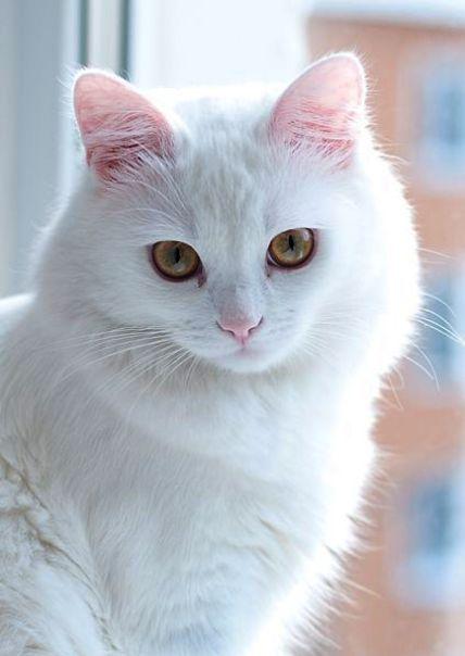 Cute Cats And Dogs Gif Both Cute Cat Names That Start With M Cute Kittens Playi Cat Cats Cute Dogs Gif Kitt Sevimli Kediler Kedileri Seviyorum Kedi