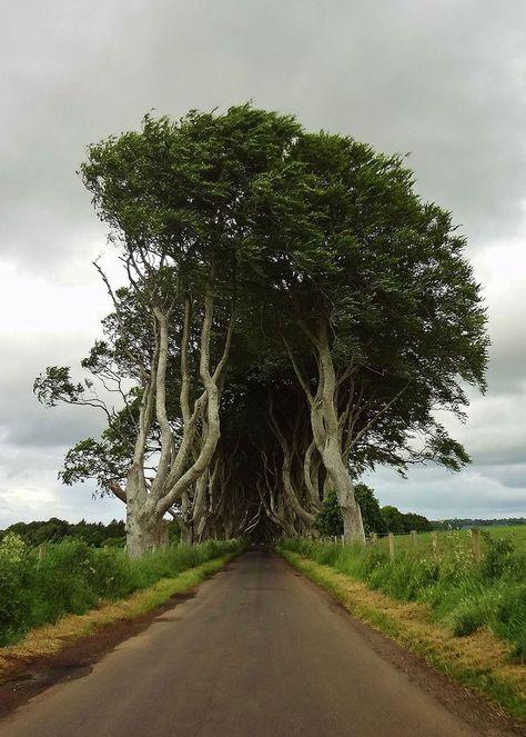 Les VRAIS tunels d'arbres de la série Game of Thrones, dans le nord de l'Irlande. #Irlande #GoT