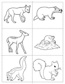 91 Top Coloring Pages Of North American Animals For Free