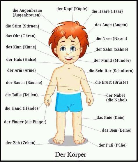 der körper  deutsch lernen  deutsch lernen deutsch und