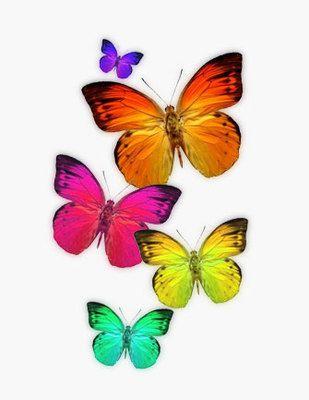 """/""""Mariposa Collection/"""" un inusual estilo Foto Enmarcada De Papel butteflies"""