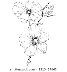 Similar Images Stock Photos Vectors Of Vector Cosmos Floral Botanical Flowers Wild Spring Leaf Wildflower In 2020 Flower Line Drawings Vector Flowers Stock Vector