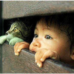 Boy Cat Hope Wallpaper Boy Cat Hope Wallpaper 1080p Boy Cat Hope Wallpaper Desktop Boy Cat Hope Wallpaper Hd Boy Cat Hope Wal Kitten Pictures Cats Animals