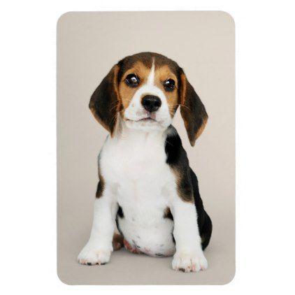 Beagle Puppy Oh So Cute Magnet Zazzle Com Beagle Puppy