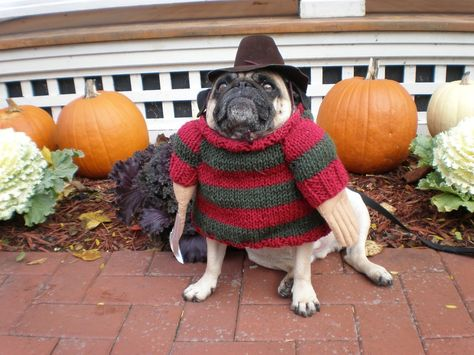 1 2 Freddie S Coming For You 3 4 Better Lock Your Door Dog Costumes Pet Costumes Pugs In Costume