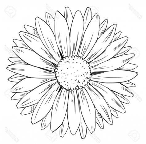 List Of Girasol Dibujo Para Colorear Ideas And Girasol