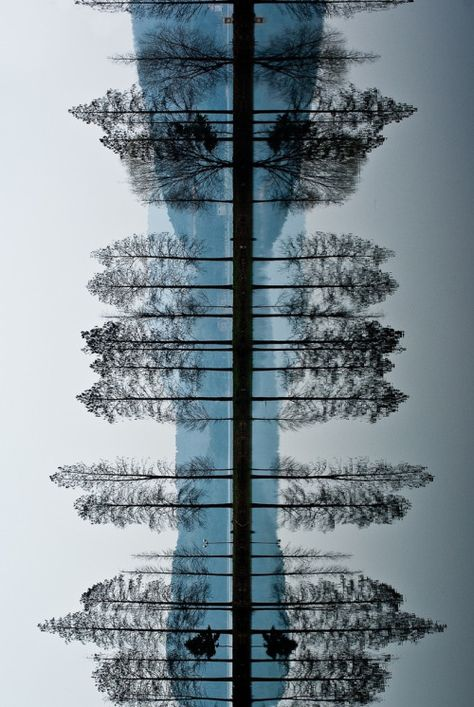 Cool tree reflection image!