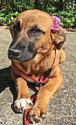Danbury Ct Shepherd Unknown Type Meet Cami A Dog For Adoption Pets Kitten Adoption Dog Adoption