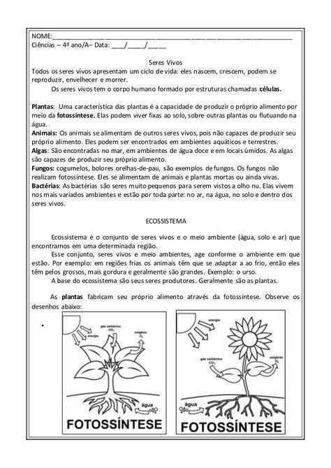 Seres Vivos E Cadeia Alimentar Atividades Sobre Plantas Cadeia