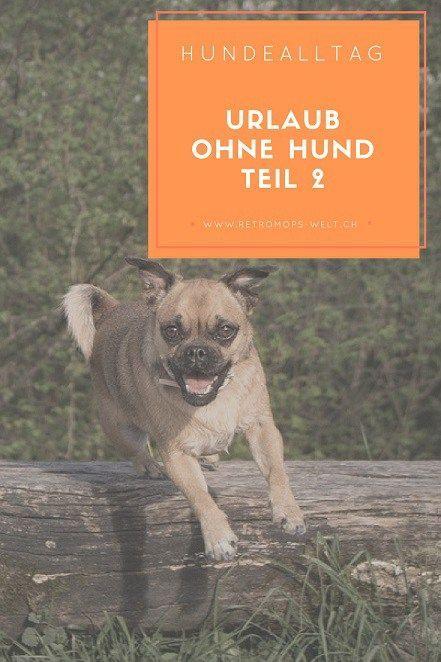 Urlaub Ohne Hund Teil 2 Retromops Mit Bildern Hunde Hundegeschichten Mops Hund