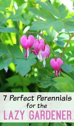 7 Perfect Perennials For The Lazy Gardener 2019 Low Maintenance Yard Low Maintenance Garden Low Maintenance Landscaping