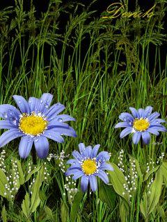 1035917 Gif 240 320 Plants Flowers Garden