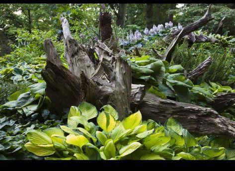 The Stumpery at Highgrove Garden