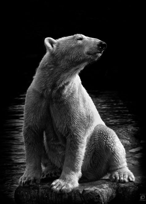 Photography By Wolf Ademeit Amazing Animals Pinterest Wolf - Powerful and intimate black white animal portraits by luke holas