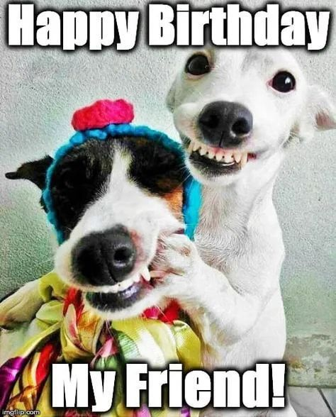 If you are always sharing birthday memes with your friends on their birthdays, look no further - we've created the ultimate funny birthday meme round-up! From Chuck Norris to Bob Ross, wish your friend's a happy birthday with these graphics. Happy Birthday Animals, Happy Birthday Wishes For A Friend, Happy Birthday Meme, Happy Birthday Messages, Happy Birthday Wishes Cards, Funny Birthday Cards, Birthday Memes, Happy Birthdays, Happy Birthday With Dogs
