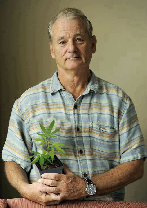 Top quotes by Bill Murray-https://s-media-cache-ak0.pinimg.com/474x/8f/aa/3e/8faa3e69964f4497d60c5fed4244c054.jpg