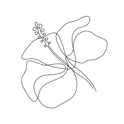 Hibiscus Flower In One Line Art Drawing Style Minimalist Black Line Line Art Drawings Flower Line Drawings Line Art Flowers