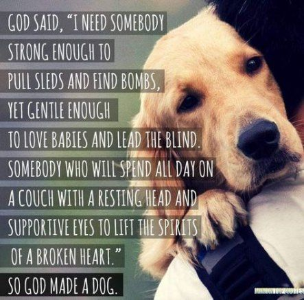 44 Ideas Dogs Quotes Love Best Friends Smile Dogs Quotes Dog