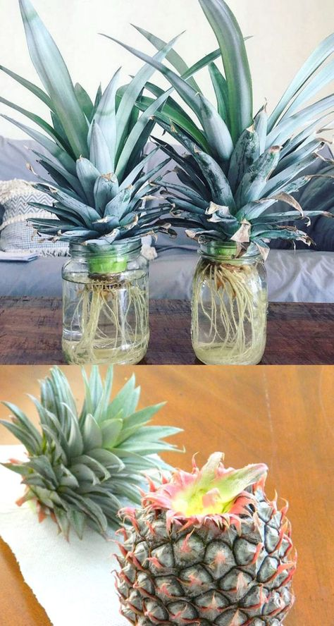 Regrow 8 Kitchen Scraps into Free Houseplants!