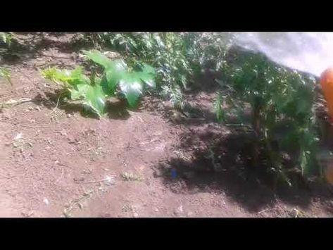 câștigurile din grădina de legume pe internet