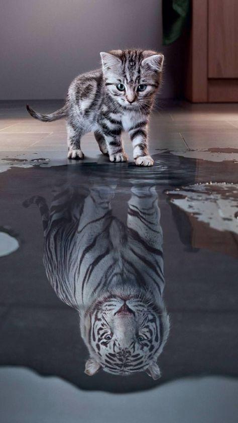 Tiger White - Imgur