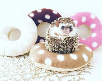 Donuts Cushion Toy Hedgehog Hedgehog Bed Guineapig Toy Ferret Toy