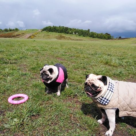 The Girls Keeping Dry And Looking Dapper On Their Wet Walkies