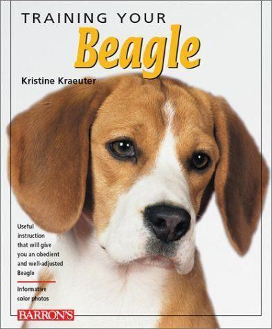 Beagle How To Potty Train A Beagle Beagle House Training Tips
