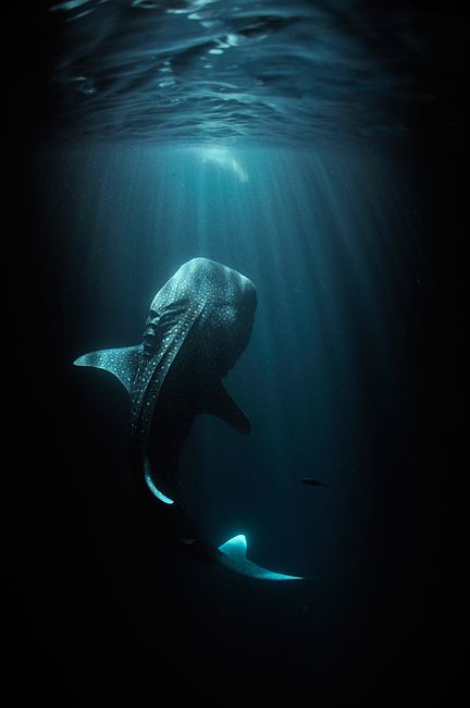 Walhai - Der größte Fisch der Meere kann bis zu zwölf Tonnen schwer und fast 20…