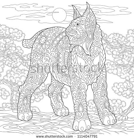 Wildcat Coloring Page Colouring Picture Adult Coloring Book