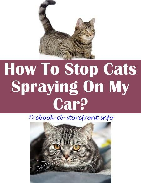 15 Impressive How To Stop My Cat Spraying Inside The House Admirable
