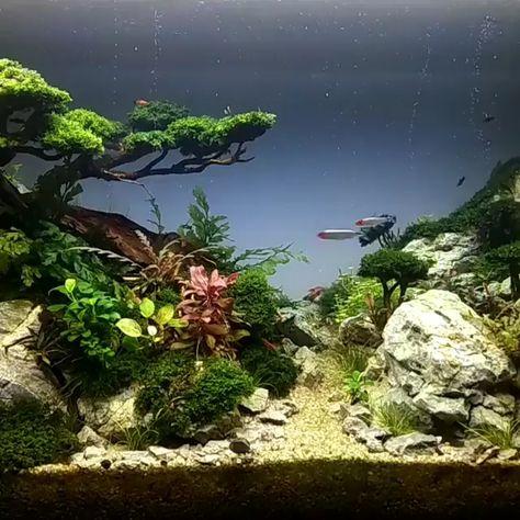 Aquarium natureaquarium #homeaquarium #aquariumdesign #saltwateraquarium #plantedaquarium #freshwateraquarium #aquariumfish #coolfishtanks #shrimptank