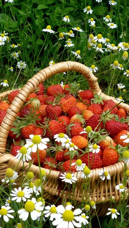 strawberry_basket_berry_camomiles_flowers_field_10325_640x… | Flickr