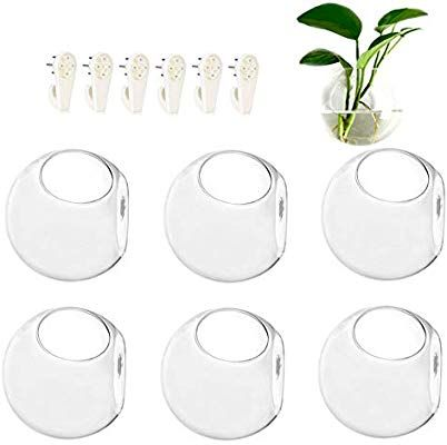 Amazon Com Pack Of 6 Wall Hanging Glass Terrariums Round Wall Planters Air Plants Containers Succ With Images Hanging Glass Terrarium Succulent Candle Holder Plant Wall