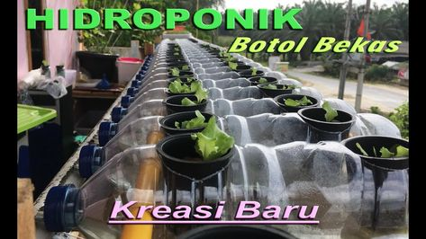 List Of Hidroponik Botol Bekas Pictures And Hidroponik Botol