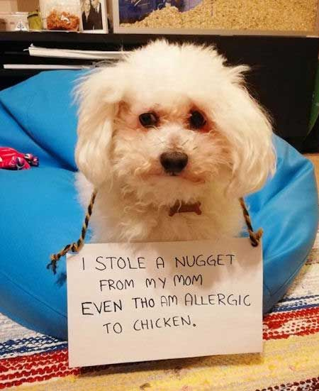 20 Shaming Dogs Pictures That Have The Most Irresistible Dog Faces