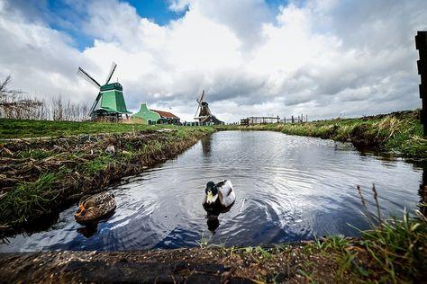 Windmills in Zaandijk