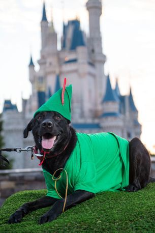 Disney Dog Halloween Costume Ideas Perfect For Your Pet In 2020
