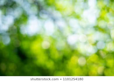 Green Bokeh On Nature Abstract Blur Background Green Bokeh From Tree Blur Background Photography Blurred Background Bokeh