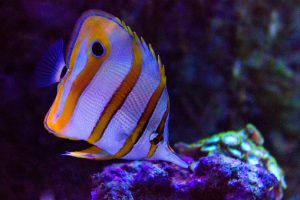 Tropical Fish For Sale Concord Fish For Sale Tropical Fish