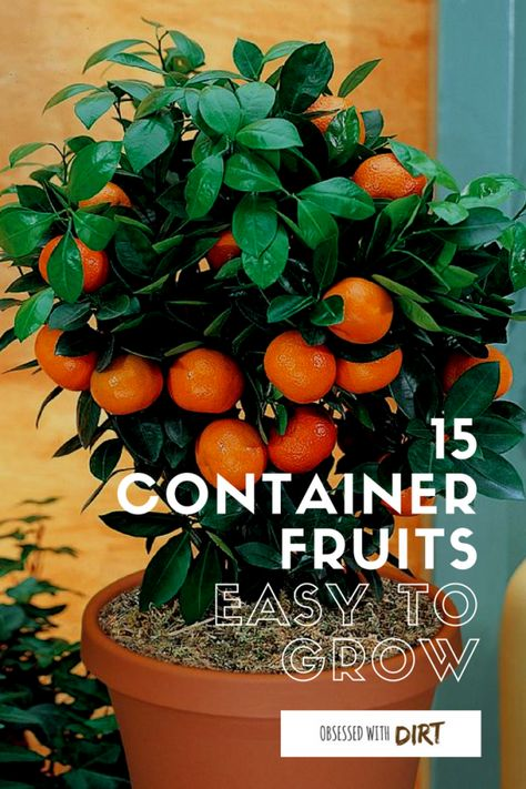 15 Container Gardening Fruit With Incredible Flavor