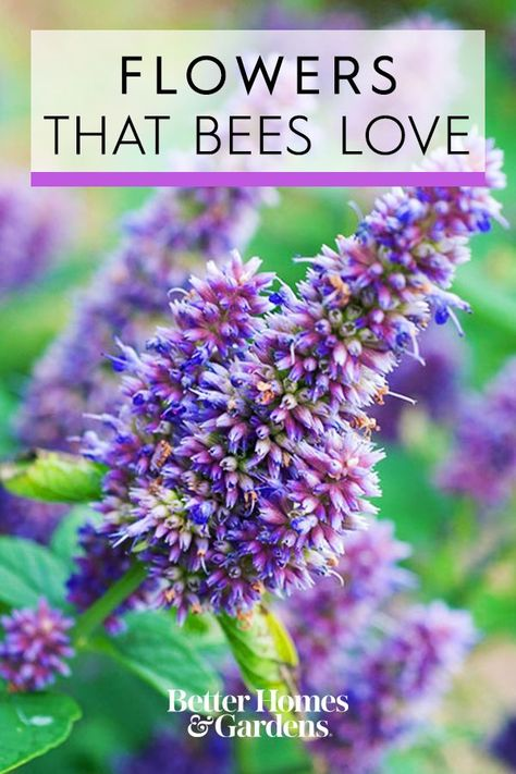 Bright, showy flowers are magnets for bees. Add plants that bees love, and watch your garden become a favorite snack bar for these pollinators. #gardening #gardenplants #plantsthatattractbees #pollinatorgarden #bhg