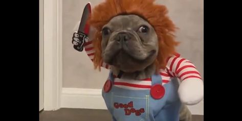 This Adorable Dog in a Chuckie Doll Costume Will Hunt You Down [Video]