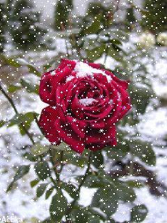 ❄️🥀❄️🍃🌹🌿❄️🥀❄️ С первым снегом!