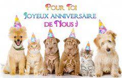 Cartes Virtuelles Joyeux Anniversaire Gratuites Joliecarte Com Joyeux Anniversaire Gratuit Anniversaire Humoristique Carte Anniversaire Humoristique